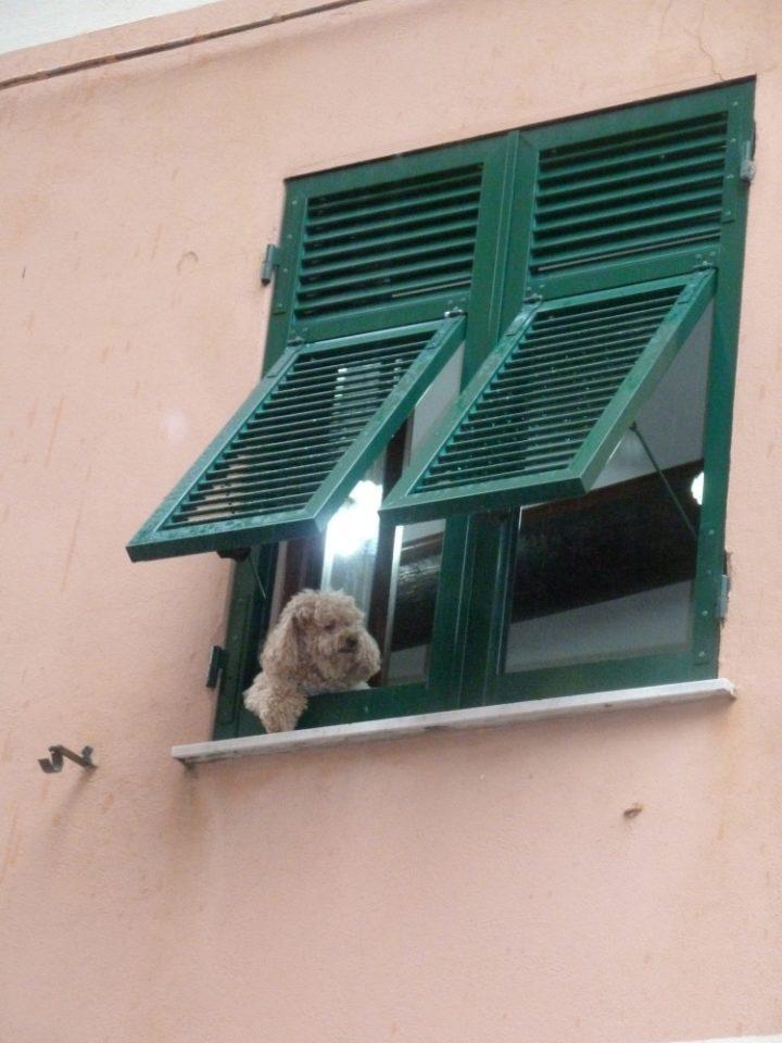 Nervi, Italy pet pooch, Italian Laundry - Street Art