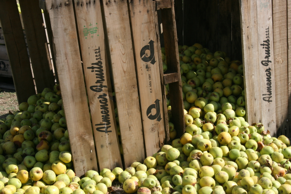 The apples in Spain fall mainly on the plain