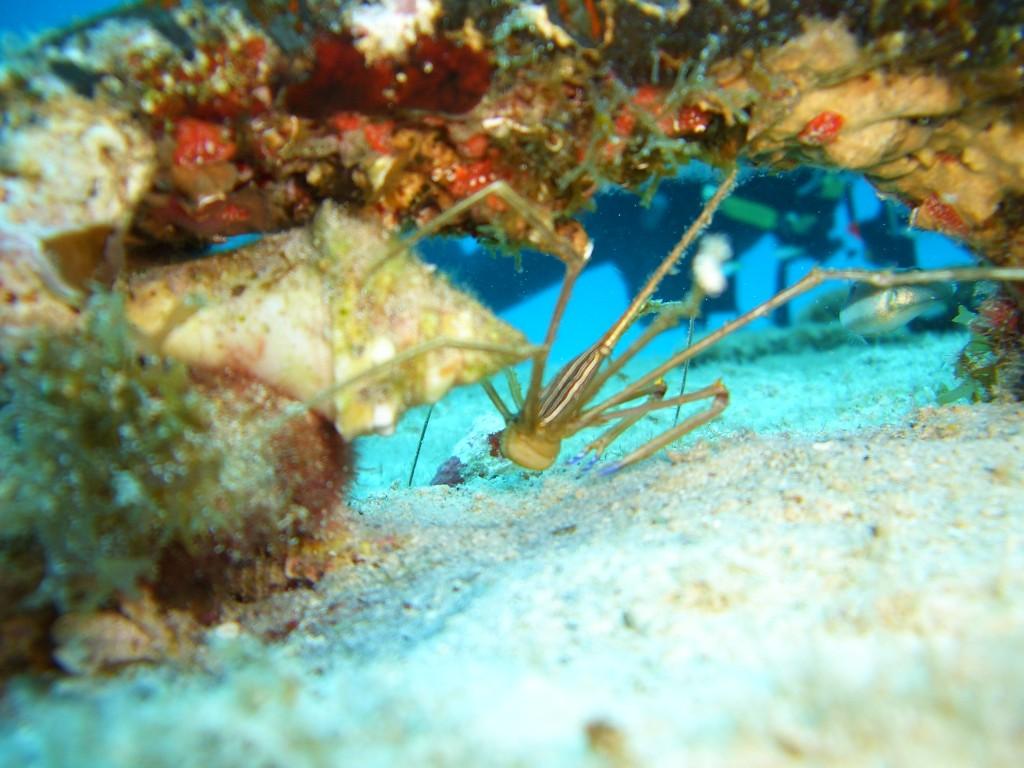 CIMG3905 1024x768 Belize: Life in the Underworld