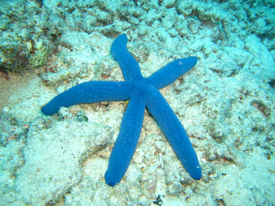 You can also see starfish while snorkelling from Castaway Island