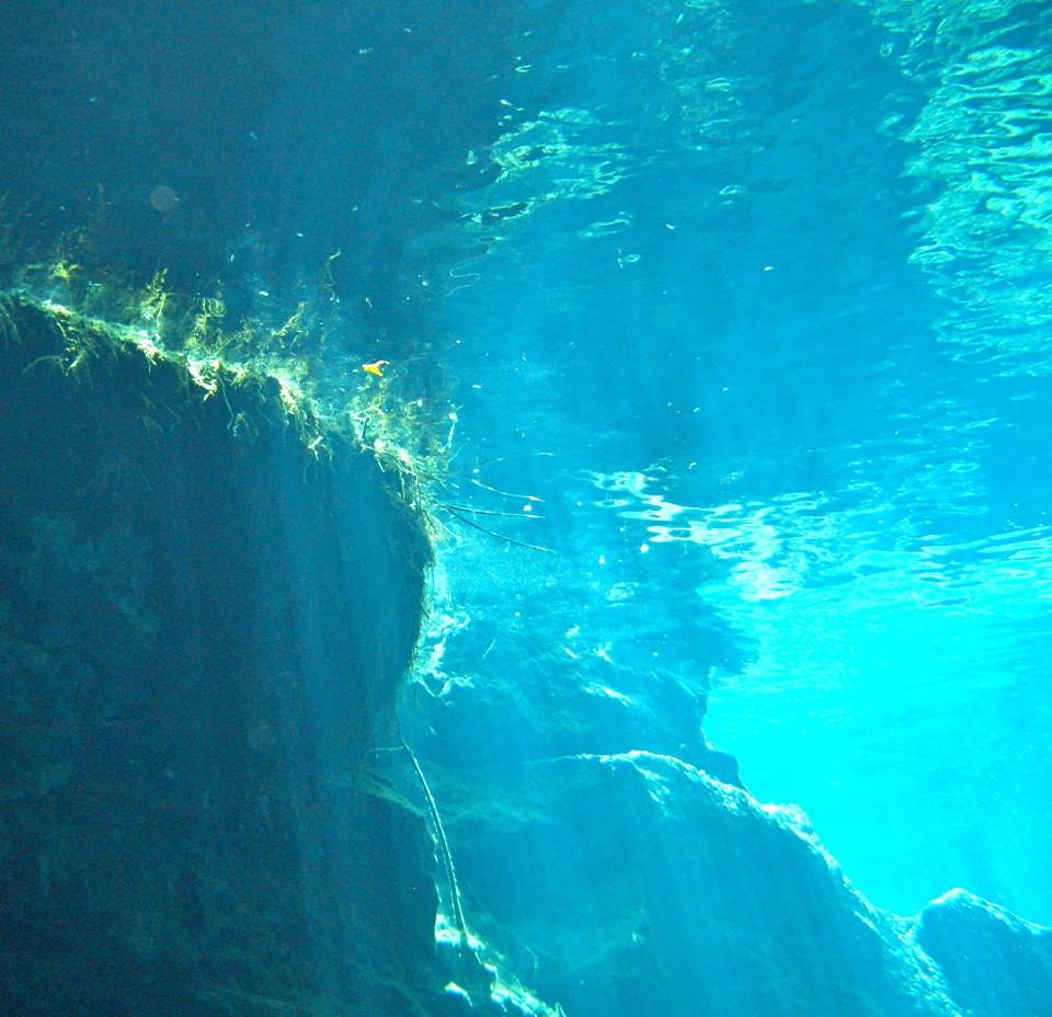 Riviera Maya Cenotes, cenotes mexico, mexico cenotes