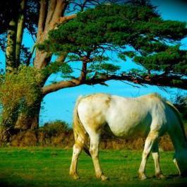 Muckross Farm, Killarney, Ireland