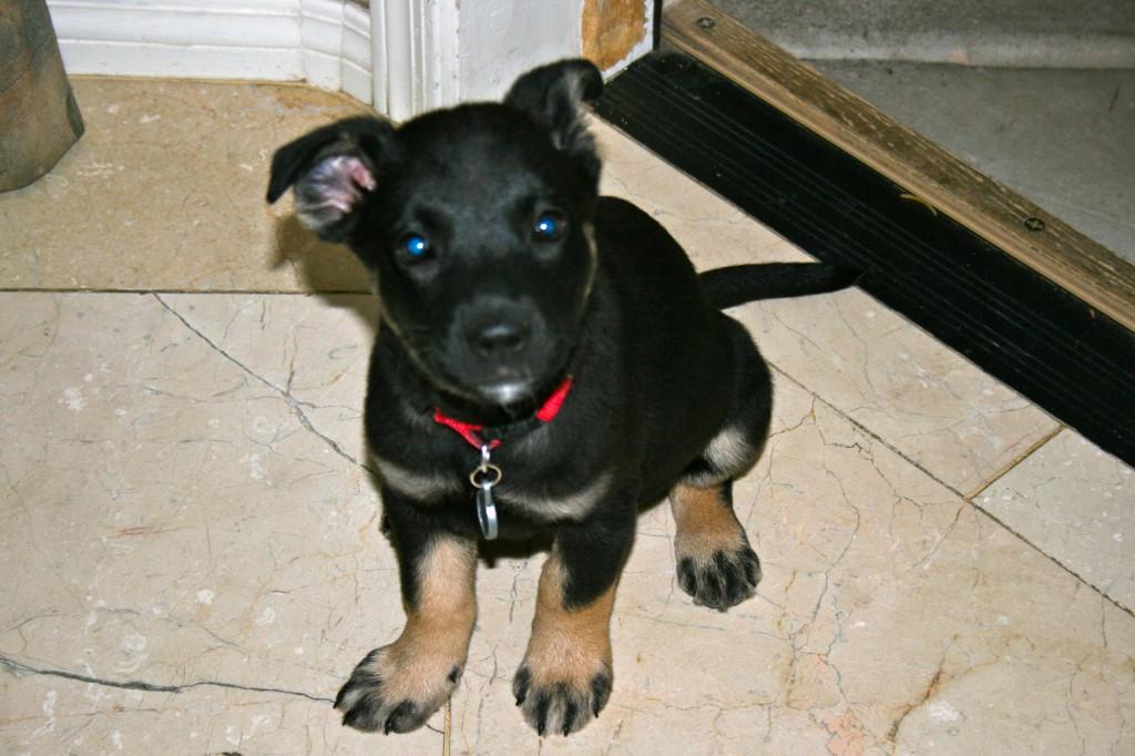 Home Fur Good Dog