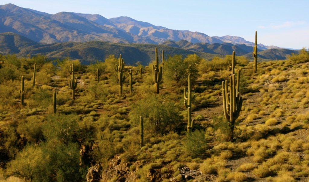 Sonoran Desert, Phoenix, AZ