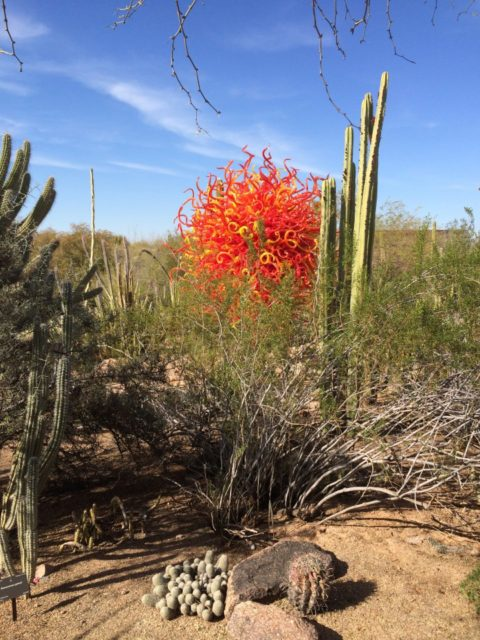 Chihuly Exhibit, Desert Botanical Gardens
