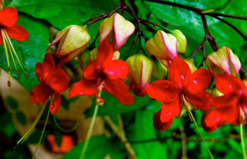 Flowers of The Banjaran Hotsprings Retreat