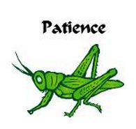 Patience Young Grasshopper!