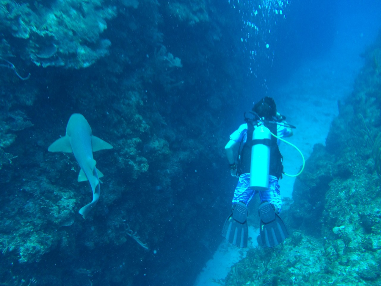 Nurse Shark - Ambergris Caye, Belize