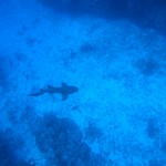 Blue Dive: Scuba Diving Belize