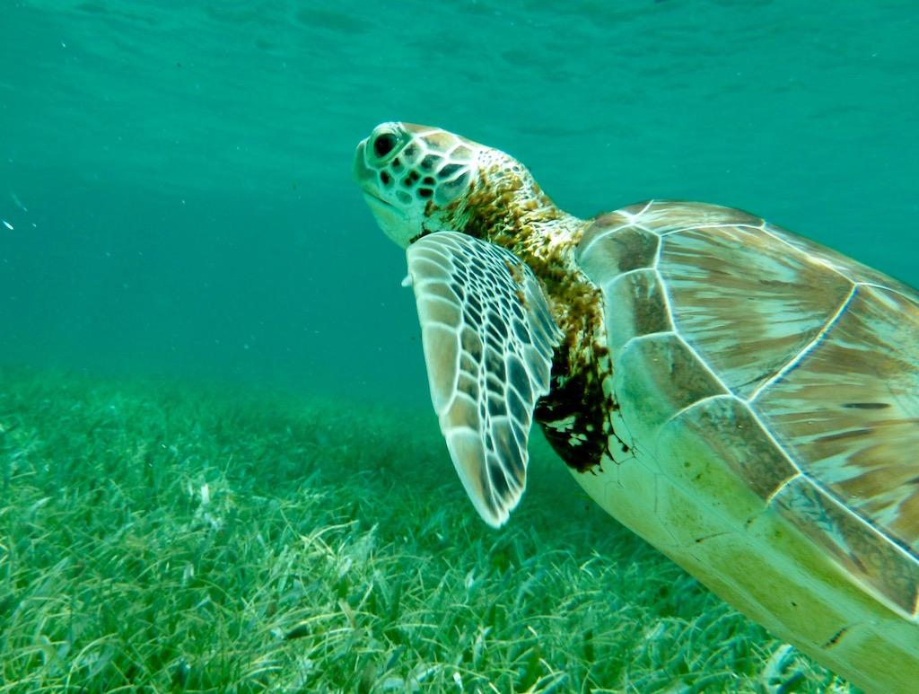 scuba dived, diving in Belize, Belize diving, Belize scuba diving, snorkeling Belize, Scuba diving Belize