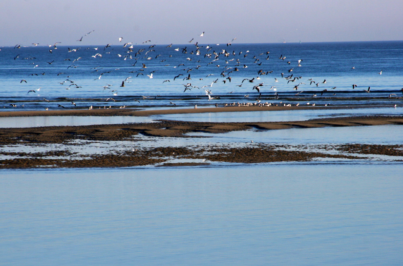 Birds over St Simons Island beach