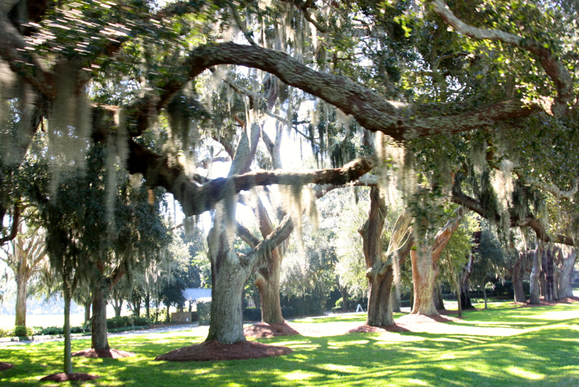 Visit St Simons Island Beach for a Relaxing Getaway