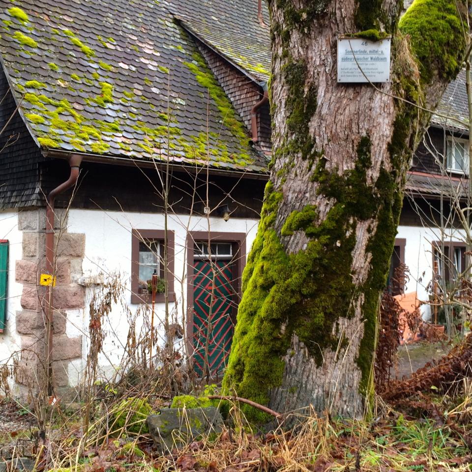 Black Forest, Germany (Schluvchsee), near Breisach, Germany