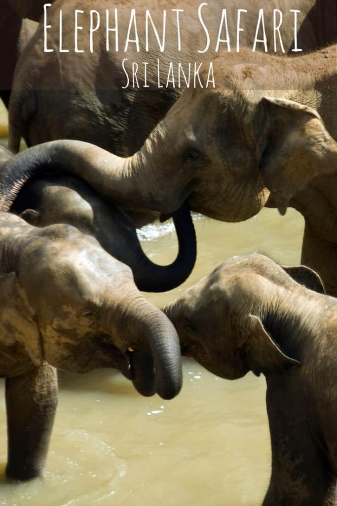 Elephant Safari, Elephant Safari Park