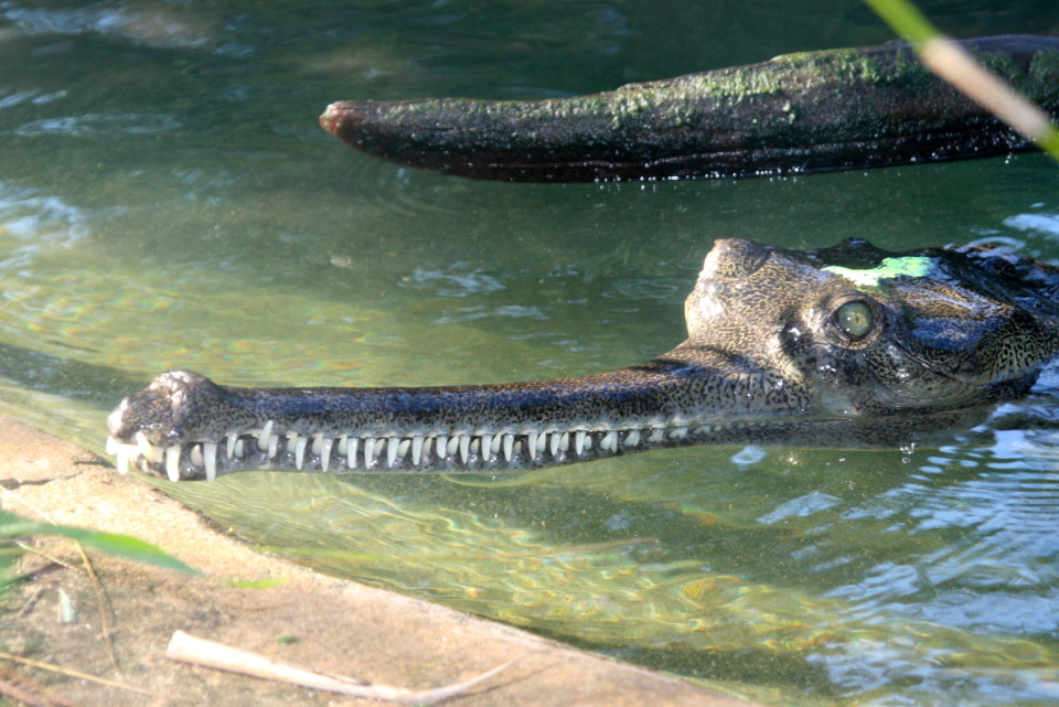 Alligator Farm St Augustine FL, a Florida roadside attraction