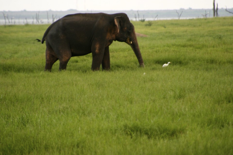 Elephant Safari, Elephant Safari Park