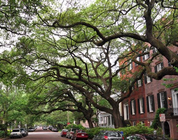 Things to do in Savannah, GA, things to do in Savannah