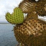 Through the eyes of a Galapagos Gringa