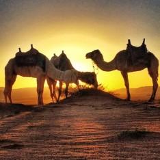 The Top Things To Do In Jordan, Wadi Rum