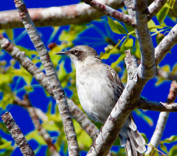 The Galapagos Islands, Birds of a Feather, Galapagos Finches Galapagos Islands, Galápagos Islands