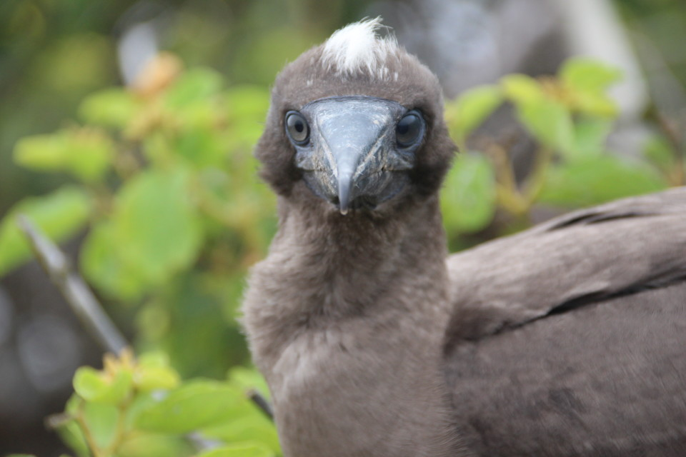 The Galapagos Islands, Birds of a Feather, Galapagos Finches, Galapagos Islands, Galápagos Islands