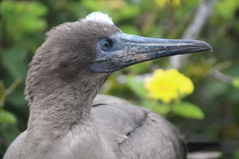 The Galapagos Islands, Birds of a Feather, Galapagos Finches, Galapagos Islands, Galápagos Islands, Galapagos birds