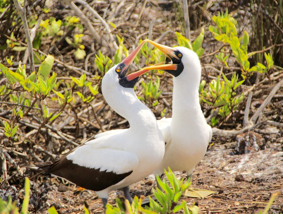 how to fly to the galapagos islands