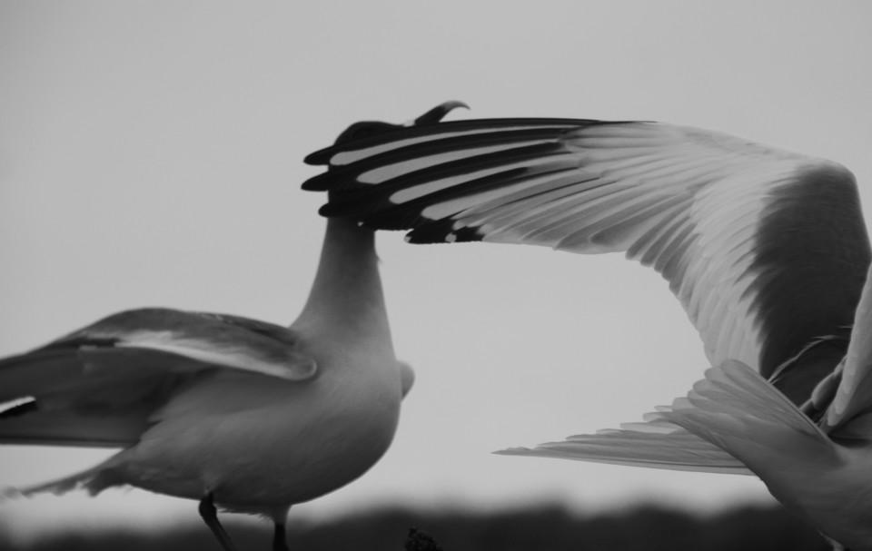 The Galapagos Islands, Birds of a Feather, Galapagos Finches, Galapagos Islands, Galápagos Islands, galapagos bird