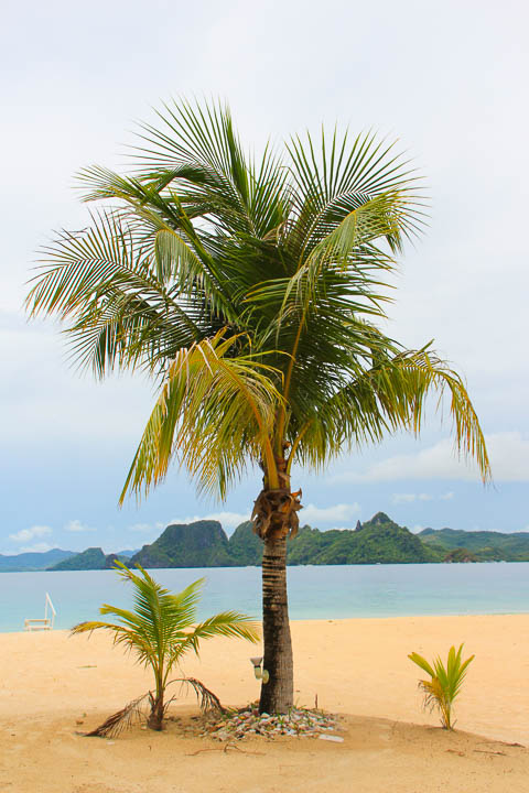 Palawan, Philippines, El Nido Resorts, Palawan El Nido, Palawan El Nido, Palawan Resorts, Philippines Tourism, palm trees