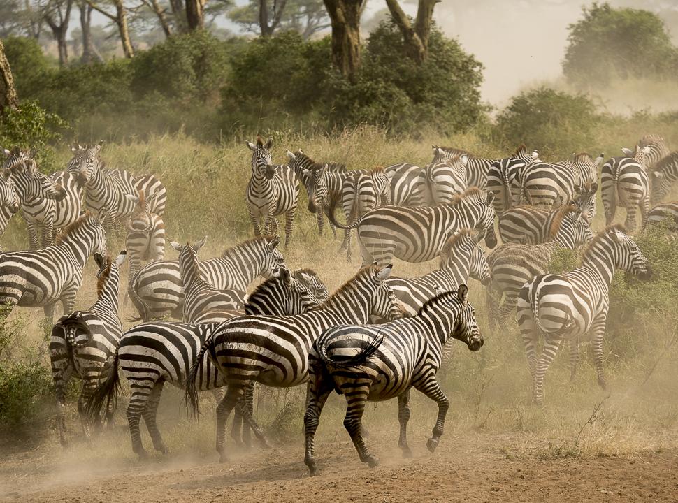 Seduced by the Serengeti, Africa, African Safari, the Serengeti
