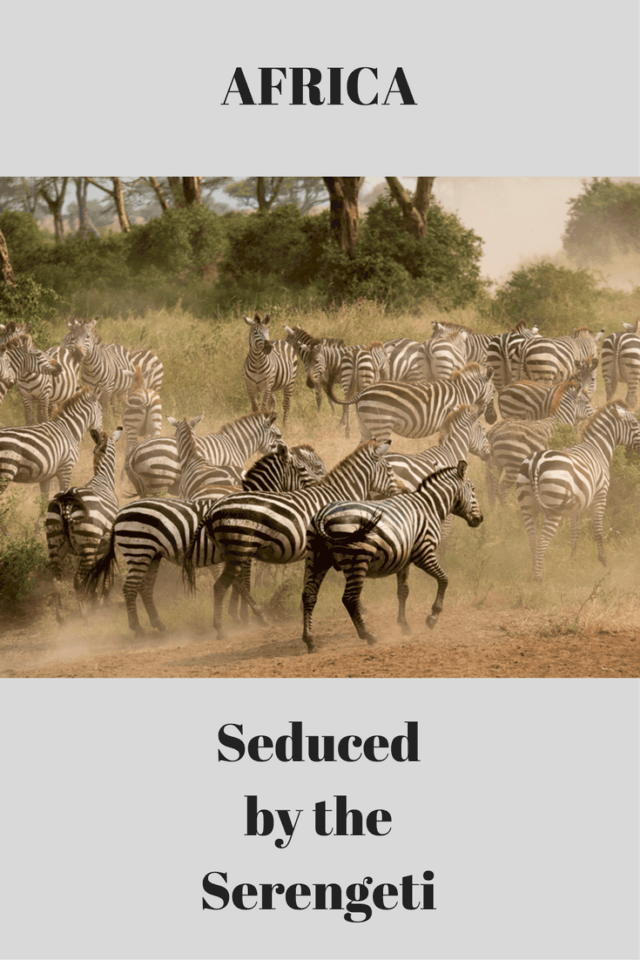 Come along with me to AFRICA, as we become seduced by the Serengeti!