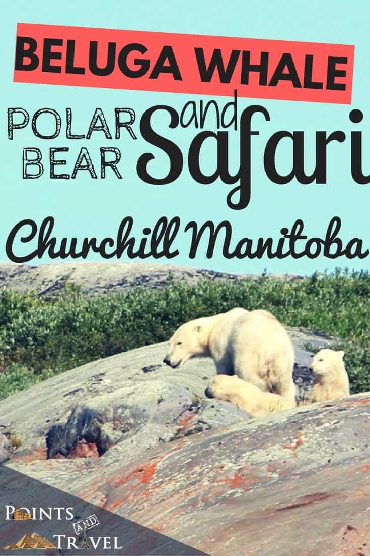 Polar Bear Pictures, Photo Safari