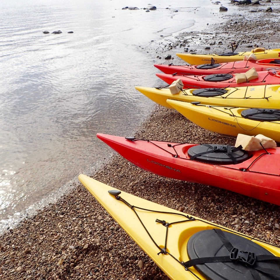 Dreams about Whales, beluga whales, churchill canada, churchill manitoba, artic adventures, baluga, kayak, sea kayaking