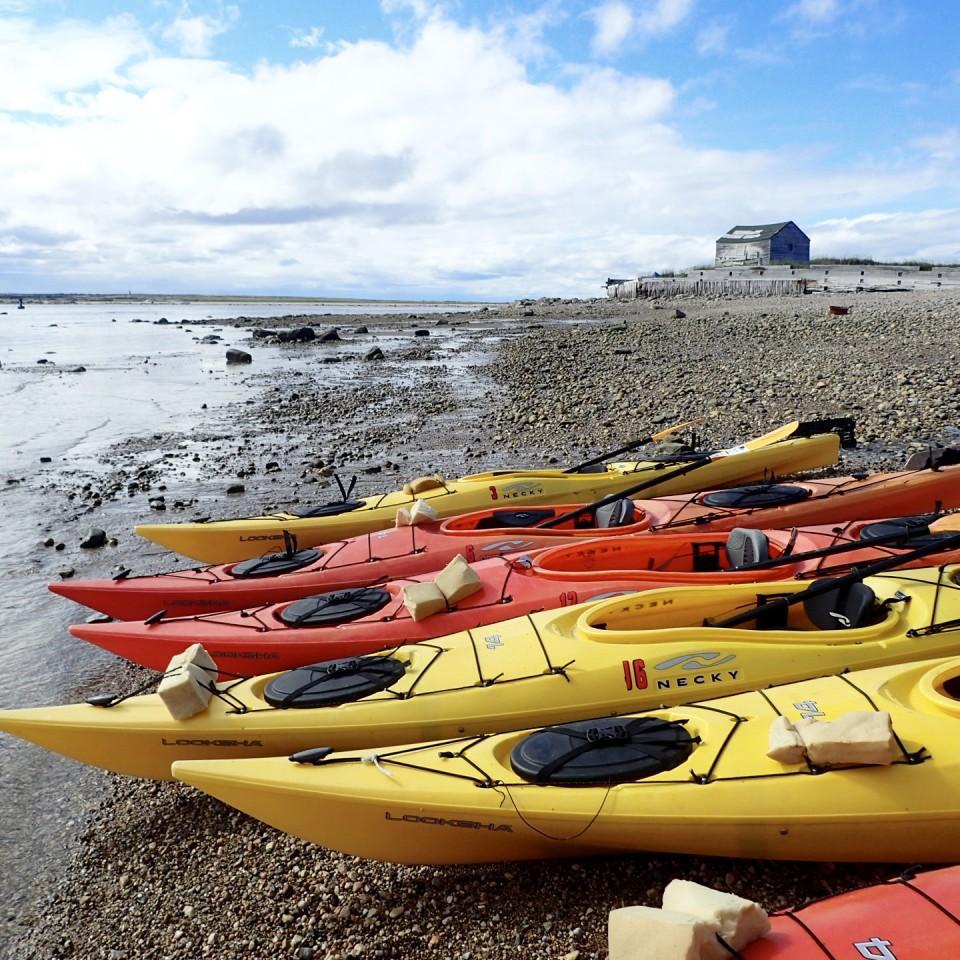 beluga whales, churchill canada, churchill manitoba, artic adventures, baluga, kayak, sea kayaking