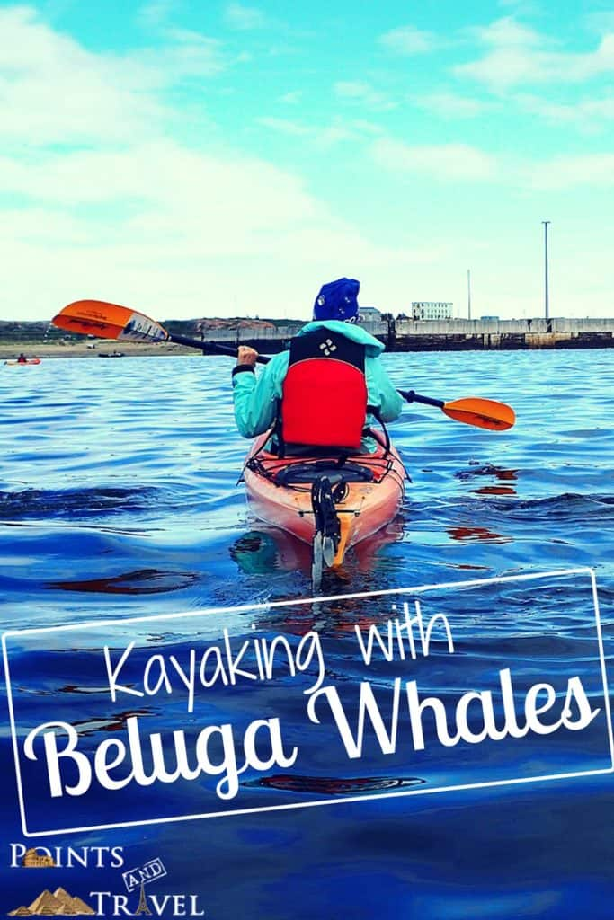 Dreams about Whales, Kayaking with Beluga Whales