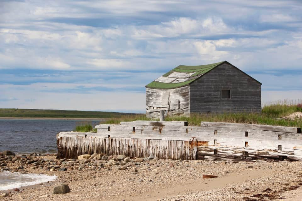 Dreams about Whales, beluga whales, churchill canada, churchill manitoba, artic adventures, baluga