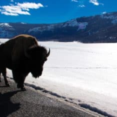 Come along with me as I take a road trip to Yellowstone National Park in Montana.