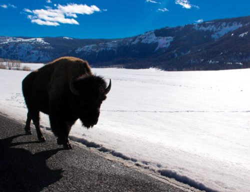 Ultimate Road Trip to Yellowstone National Park