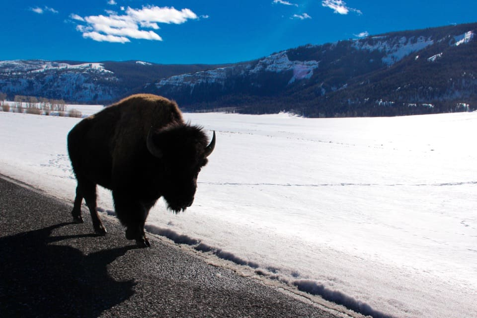 A Road Trip to Yellowstone National Park in Montana