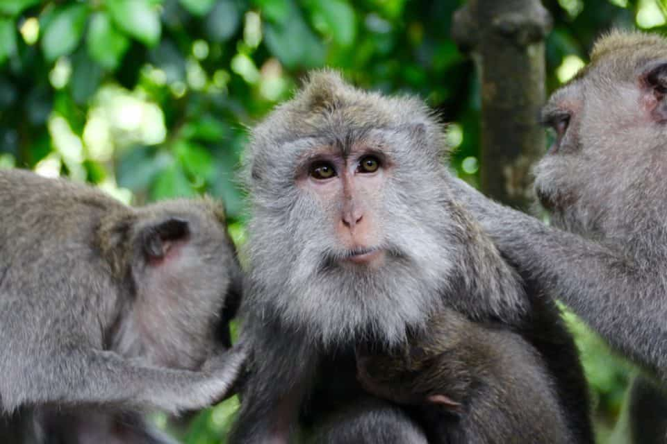 Sacred Monkey Temple, Bali, Indonesia: Singapore, Asia Cruise: 3 Port Cities in Southeast Asia Not to Miss