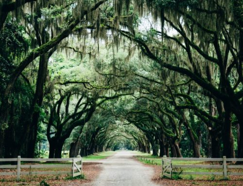 Best Things To Do In Savannah GA  – A Travel Guide