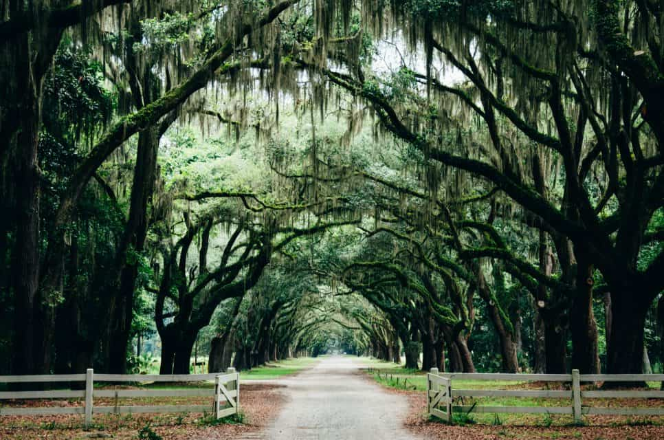 Moss covered oaks, Things to do in Savannah