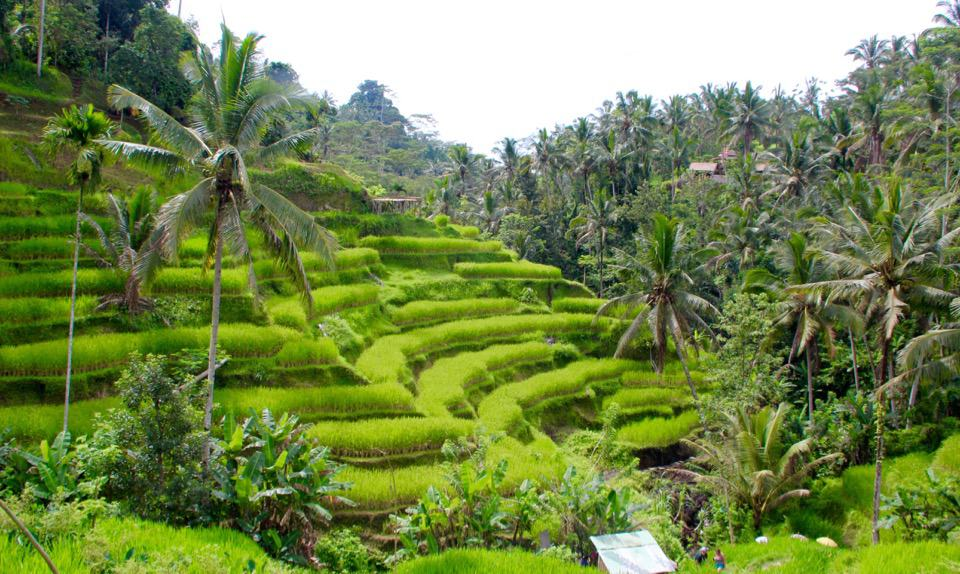Tegalalang Rice Terraces, Time in Bali, Time in Bali, Indonesia Holiday in Bali