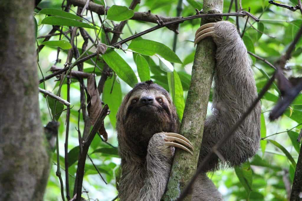 Costa Rica National Parks, sloth