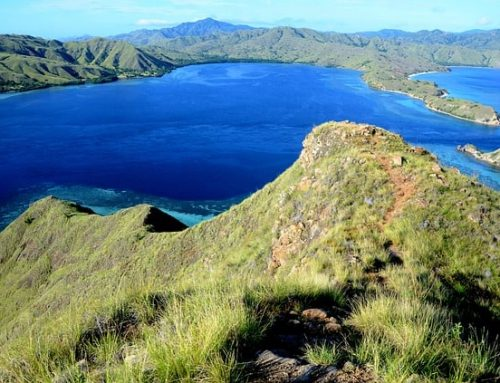Komodo Island: Inside the Dragon's Lair