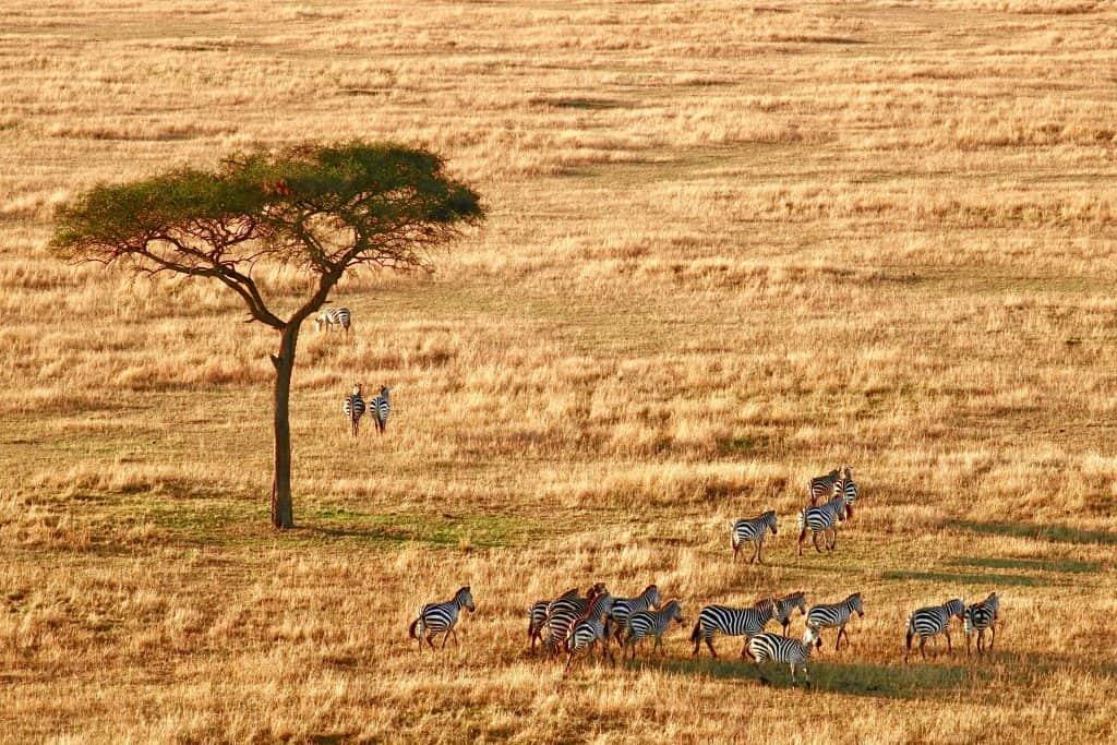 Tanzania Safari,