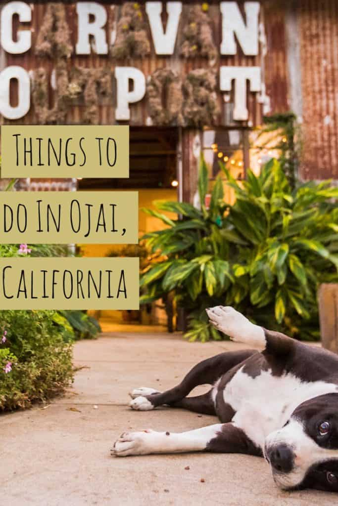 Ojai, California With GMC & Dogs!
