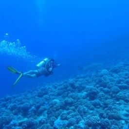 Scuba Diving in Bora Bora, things to do in Bora Bora, What to do in Bora Bora, Bora Bora Holidays
