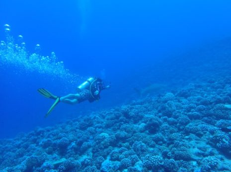 Scuba Diving in Bora Bora, things to do in Bora Bora, What to do in Bora Bora, Bora Bora Holidays