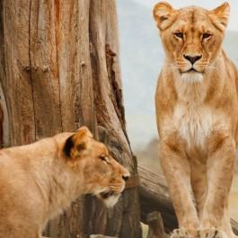 animals on a safari, animals on an African safari, safari animal list, safari animals list, animals you will see on a safari, #Africa #African #safari